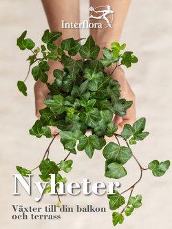 Erbjudanden från Interflora i Interflora ( Går ut imorgon)