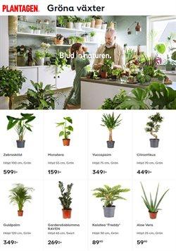 Plantagen-katalog ( Mer än en månad )