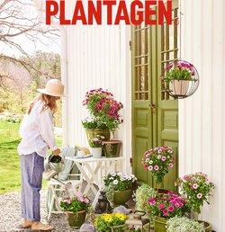 Plantagen-katalog ( Publicerades igår )