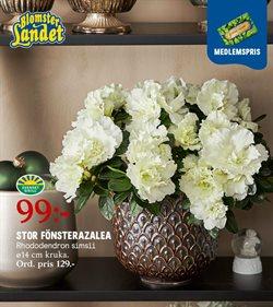 Bygg och Trädgård erbjudanden i Blomsterlandet katalogen i Skara ( 8 dagar kvar )