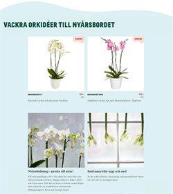 Erbjudanden från Bygg och Trädgård i Blomsterlandet ( 9 dagar kvar )