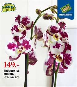 Blomsterlandet-katalog ( 19 dagar kvar )