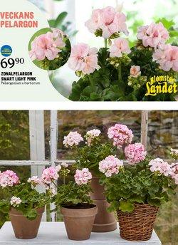 Blomsterlandet-katalog ( 2 dagar sedan )