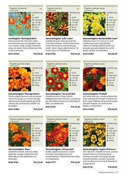 Erbjudanden i kategorin Blomlåda i Impecta