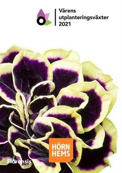 Hörnhems handelsträdgård-katalog ( Mer än en månad )