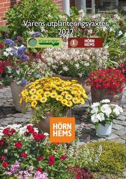 Erbjudanden från Hörnhems handelsträdgård i Hörnhems handelsträdgård ( Mer än en månad)