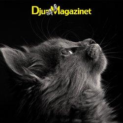 Erbjudanden från Djurmagazinet i Djurmagazinet ( 6 dagar kvar)